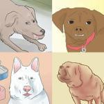 Wikihow Dogs