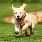 LAN 'Landlord won't allow pets' Doggo